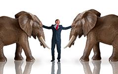 QUOTI-20151110-UNE-elephants.jpg